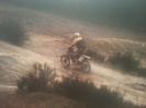 Honk 2007